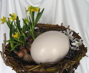 ダチョウの卵.jpg