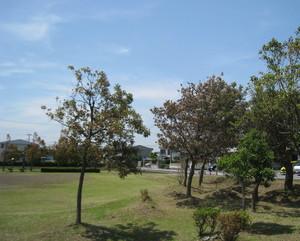 塩害の木々1.jpg