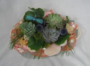 多肉植物アレンジメント1.jpg