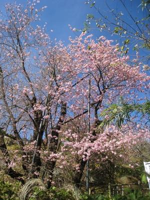 IMG_9522.JPGのサムネール画像のサムネール画像