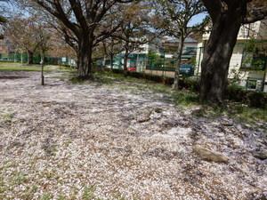 桜の花びらじゅうたん