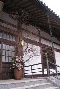花まつり桜2.jpg