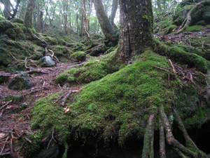 140907樹林帯のサムネール画像