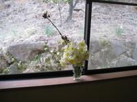 150404花祭り小品3